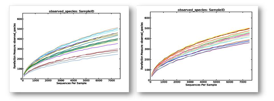 Figura 1. Curvas de rarefacción (especies observadas frente a secuencias analizadas  por muestras).