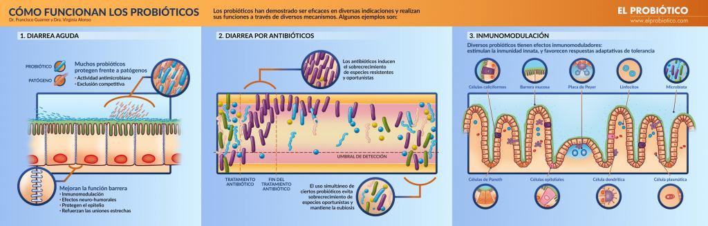 Infografia. Cómo funcionan los probióticos