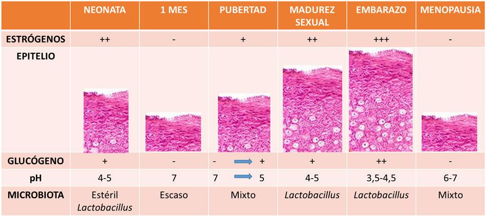 https://www.elprobiotico.com/continguts/figura1.jpg
