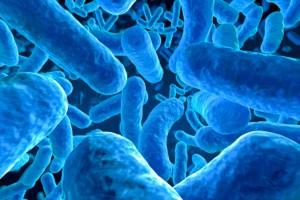 Documento de consenso de la ISAPP sobre el concepto de probiótico
