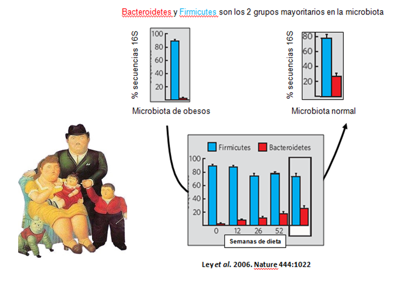 firmicutes bacteroidetes ratio obesidad y diabetes